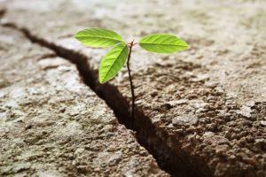 resiliency and overcoming trauma
